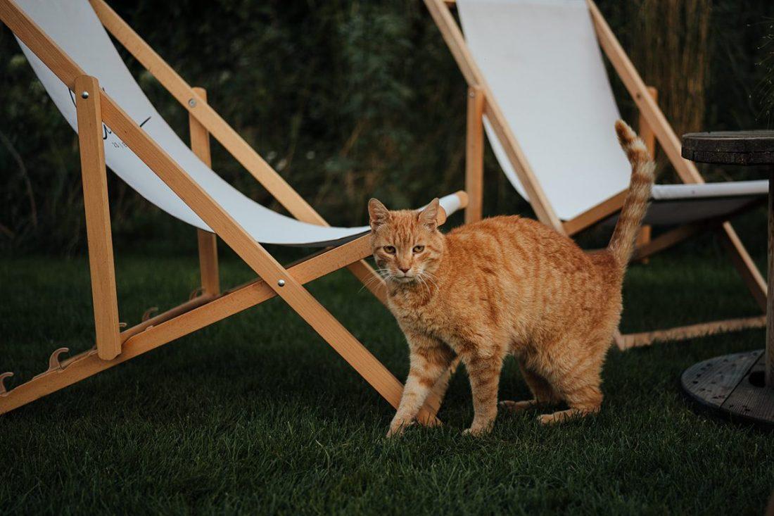 najlepsze zdjęcia ślubne kot